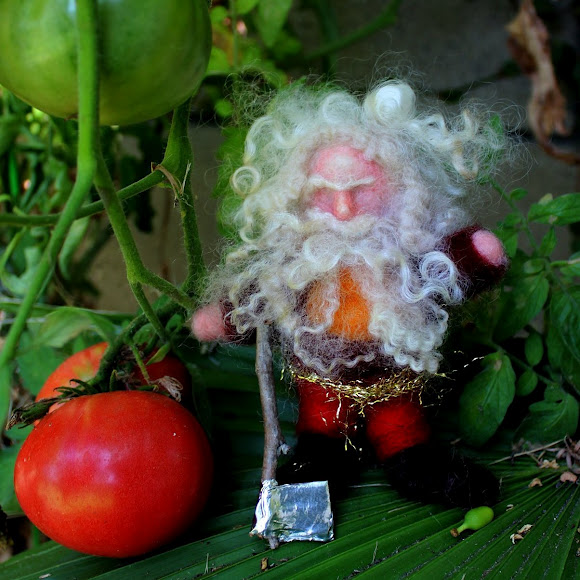 Jzin's curly white bearded felted gnome. square. Felting gnomes with Christine Newell. Fall Seasons Nature Table miniature doll. Wednesday morning craft group. Waldorf school of Orange County, California. CastleofCostaMesa.Com.