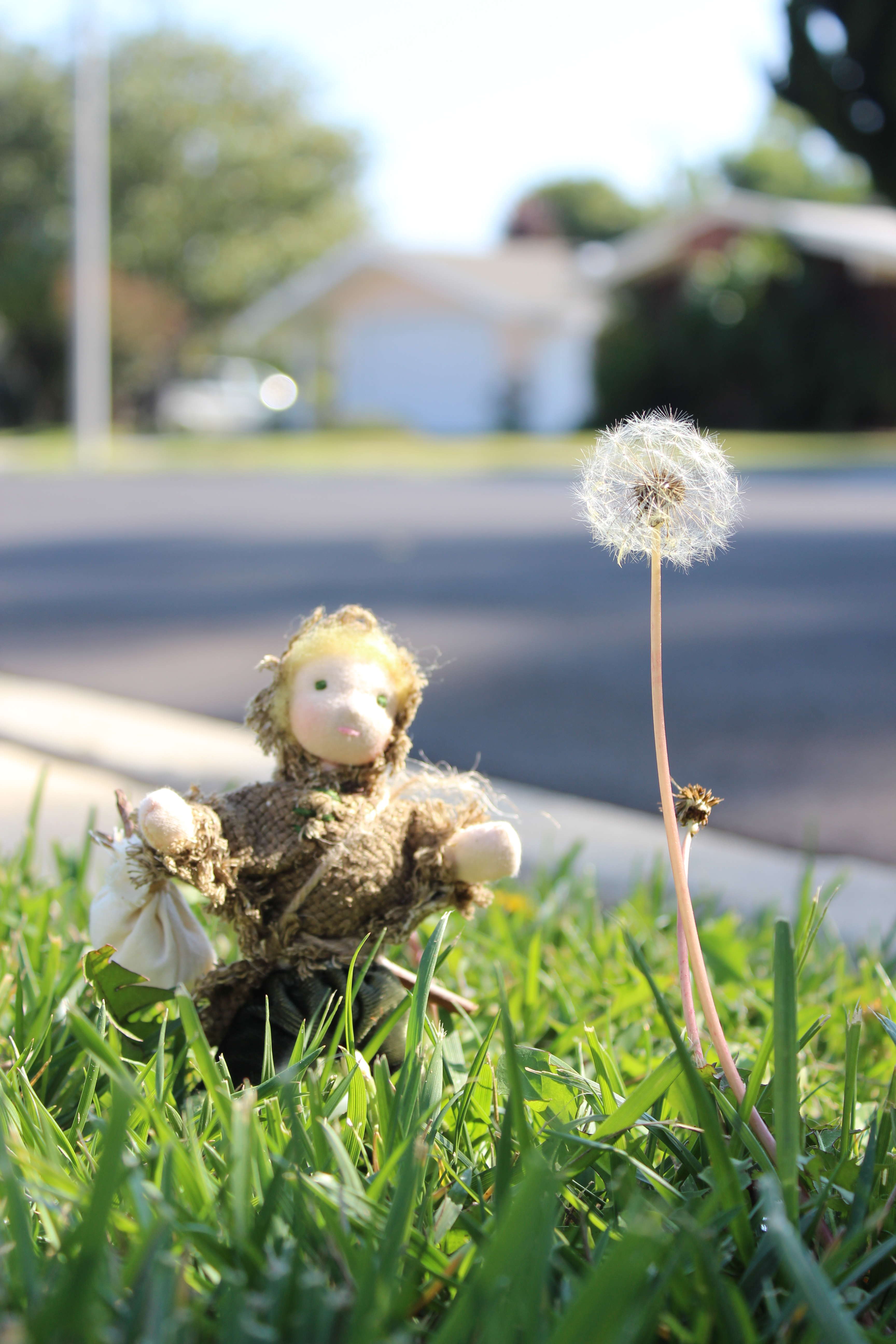 Russell the Root Child contemplating a dandelion. Waldorf Seasons Nature Table Dolls handstitched by CastleofCostaMesa.com