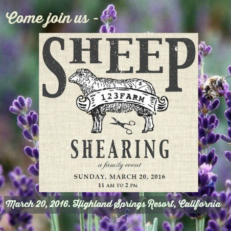 160205 Square flyer Come join us Sheep Shearing