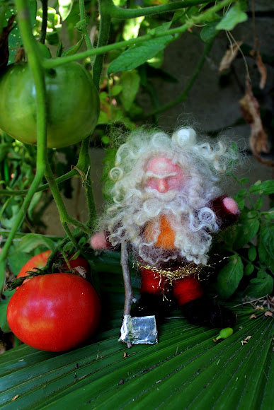 Jzin's gnome with ripening tomatoes. Waldorf wednesday morning craft group Company of Angels. Waldorf School of Orange County,CA. Felting gnomes with Christine Newell.
