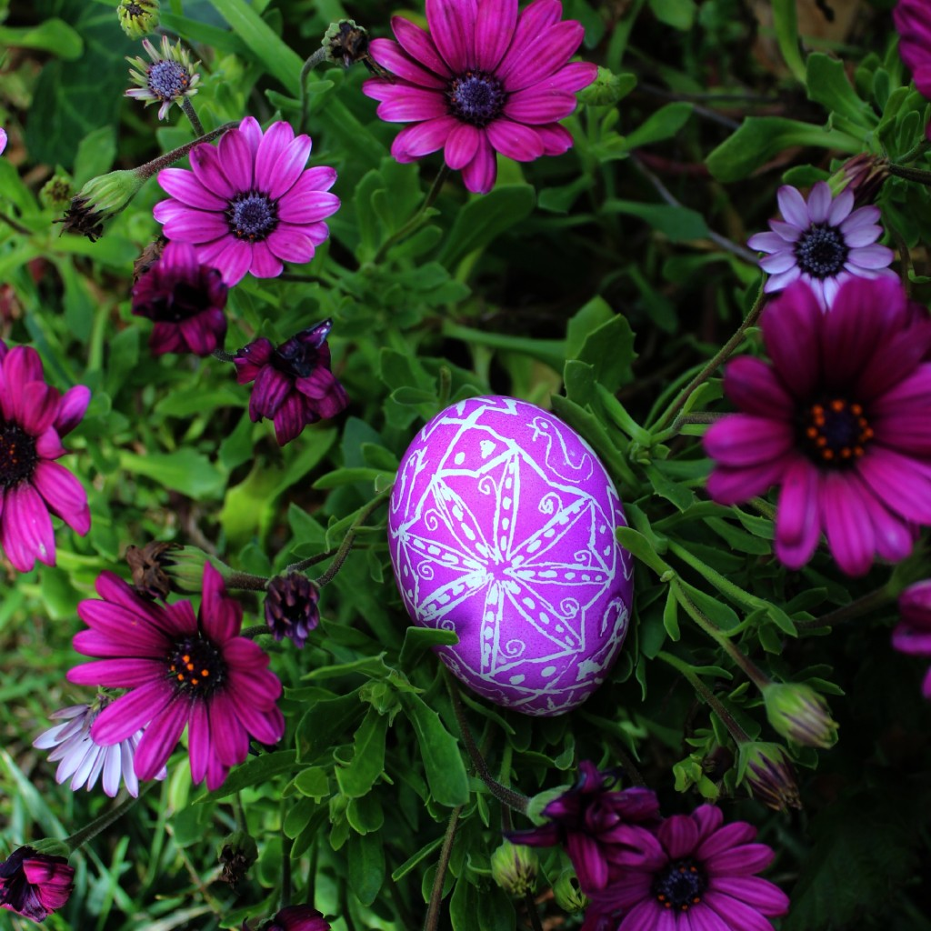 130320 Jzin's first handmade Ukranian egg for easter. Photo among purple daisies