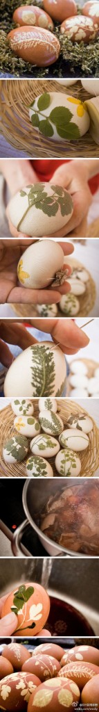Leaf eggs on weibo. Nature has the best designs.