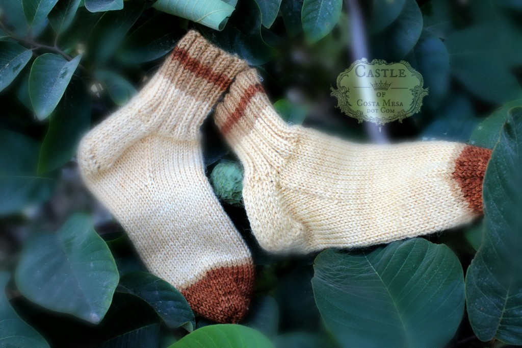 140929 Christine's Knitted brown socks in the round on fruiting cherimoya tree 2