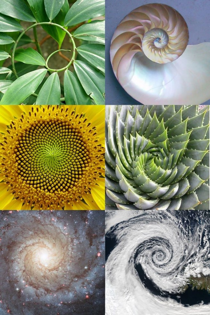 140915 Sacred Geometry Golden Ratio Spiral of Life Nature Fibonacci Sunflower whorl Craft Group Weaving CastleofCostaMesa