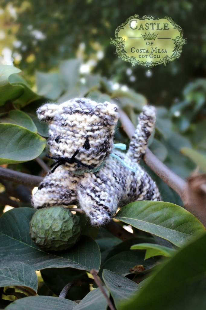 141007 Melissa's knitted calico grey cat playing with cherimoya on tree 2