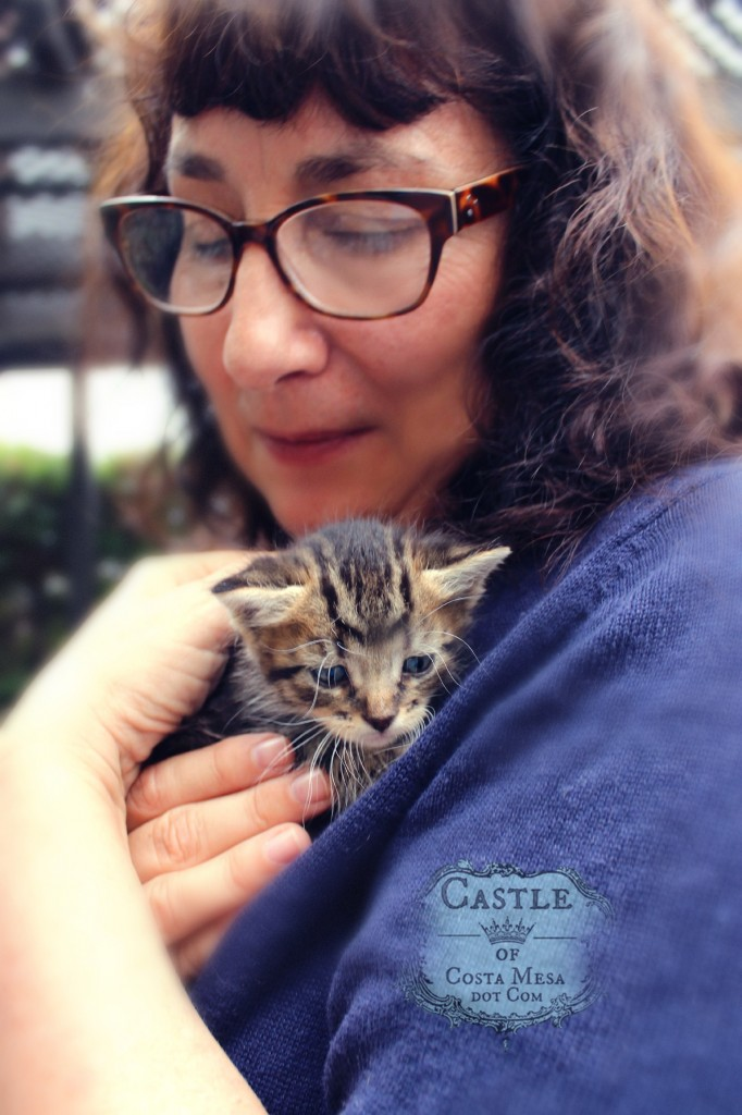 141021 Julie with little tiger kitten 2