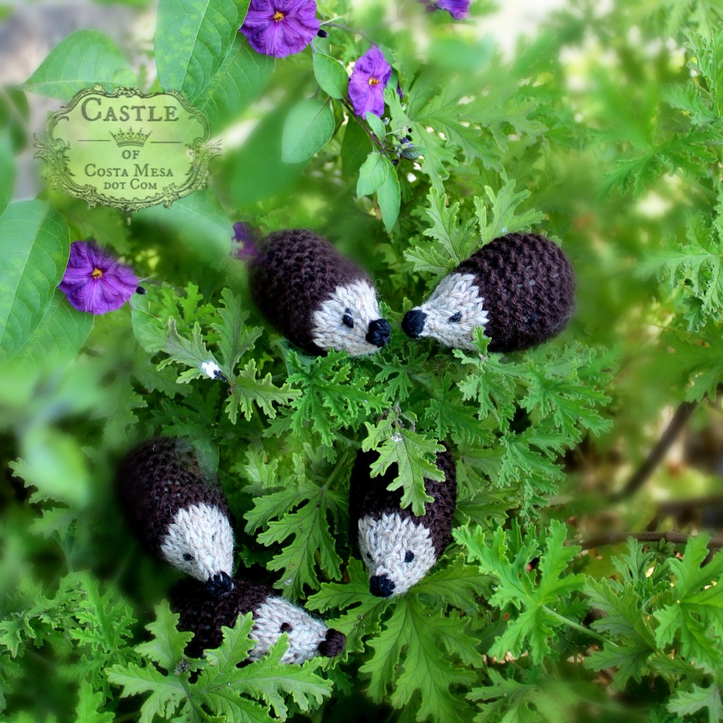 141028 Christine's knitted hedgehogs in the shrubbery