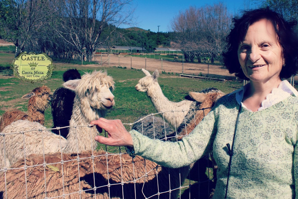 150210 Zhenny from Sofia Bulgaria posing with farmed alpacas.