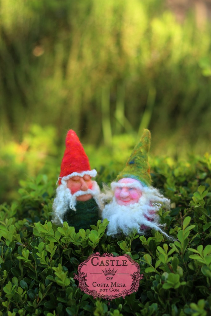 141209 gnome buddies Wigfrith and Æthelweard strolling on boxwood on a sunny morning.