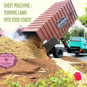 160607 Sheet Mulching turning lawn into food forest square 6204